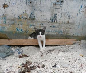 chaton à Baja California
