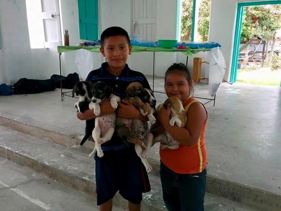 Enfants qui apportent leurs chiots à la clinique de la FAVI à Sarteneja, Belize