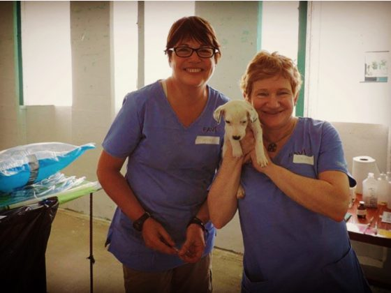 Bénévoles à la clinique de la Fondation Aide Vétérinaire Internationale