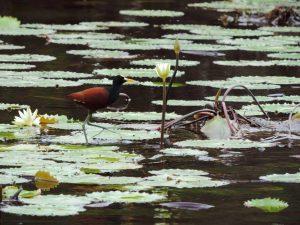 Oiseau au Belize