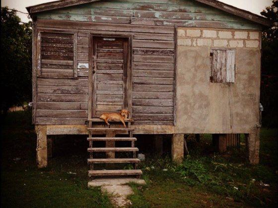Chien de Sarteneja, Belize