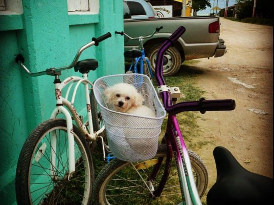 Hop! À la clinique de la FAVI à Sarteneja, Belize