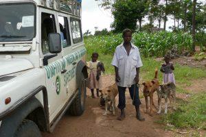 Vaccination des chiens en Tanzanie