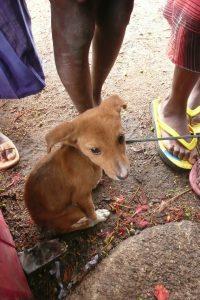 Chiot en Tanzanie