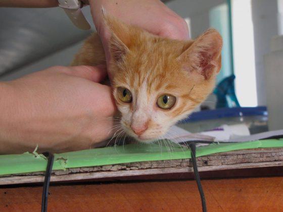 Un mignon petit chat roux