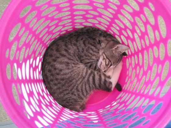 Un chat bien confortable dans son panier à linge