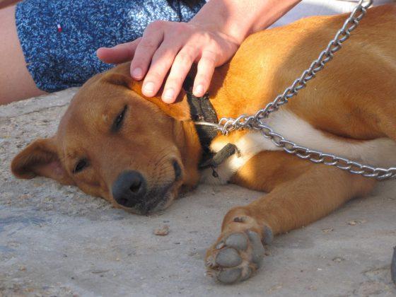 Un chien bien détendu