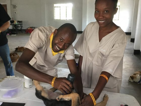 Bénévoles tanzaniens de Mbwa Wa Africa à la clinique FAVI