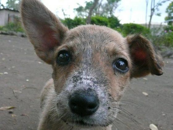 Petit chien curieux à la clinique FAVI en Tanzanie