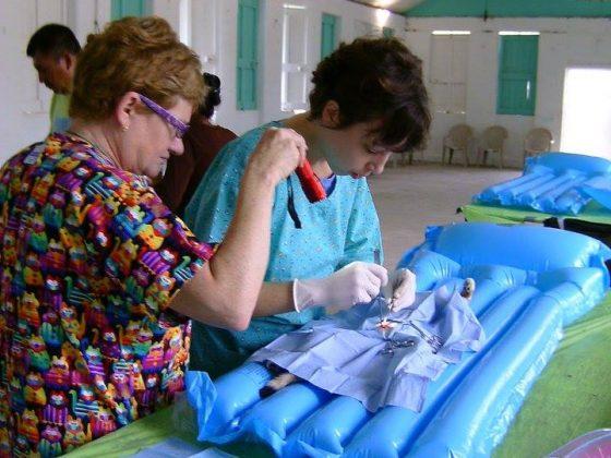 Stérilisation d'une chatte au Belize avec la Fondation Aide Vétérinaire Internationale