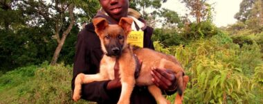 Vacciner 5000 chiens en 2 jours, c'est possible!