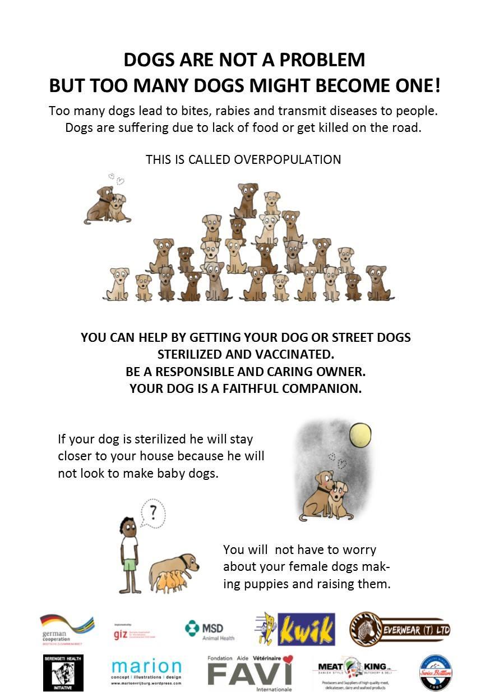 L'importance de faire stériliser son chien