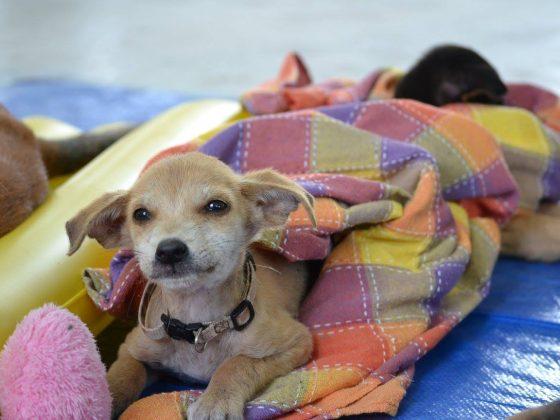 Un adorable petit patient de la FAVI à Sarteneja, Belize