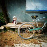 Un joli petit chien de Sarteneja, Belize