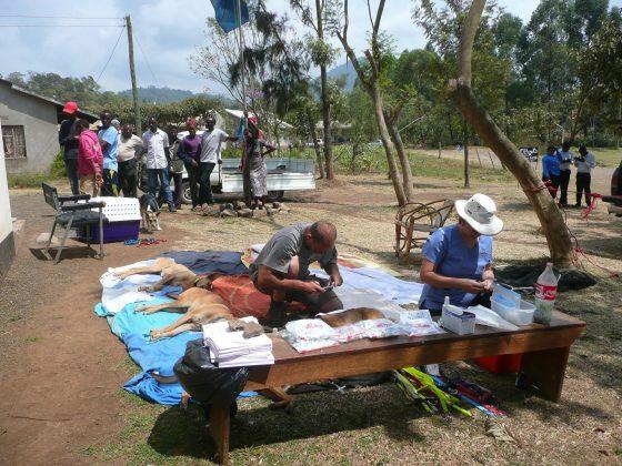 Zone post-opératoire à Baraa en Tanzanie