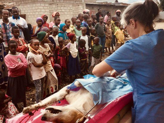 Clinique de stérilisation FAVI dans les rues d'Arusha en Tanzanie.