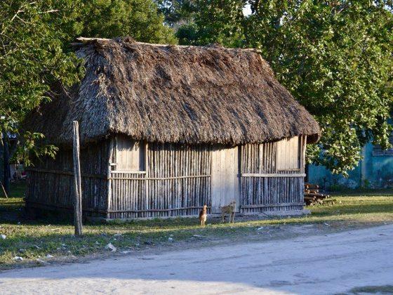 Faune locale dans le village maya de Patchakan, Belize
