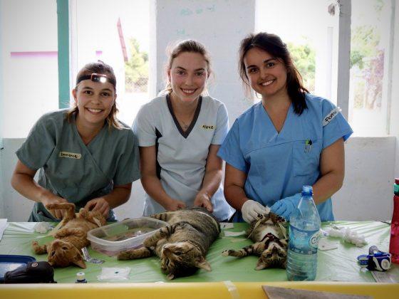 Des étudiantes en médecine vétérinaire en action à Sarteneja, Belize
