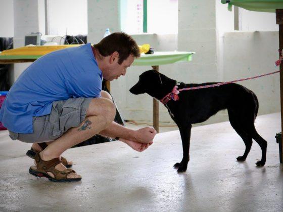 Ne t'inquiète pas, tout va bien aller! Voici ce que nos bénévoles non-vétérinaires peuvent faire à une clinique de la FAVI.