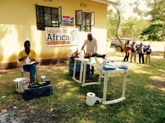 Notre clinique en plein air à Baraa en Tanzanie