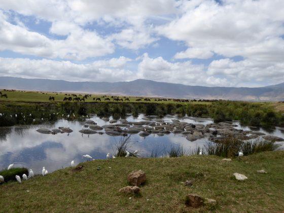 Magnifique cratère du Ngorongoro en Tanzanie