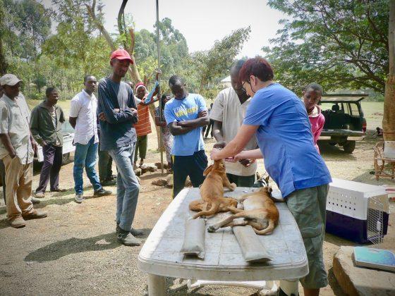 Zone pré-opératoire sous observation à Baraa, Tanzanie