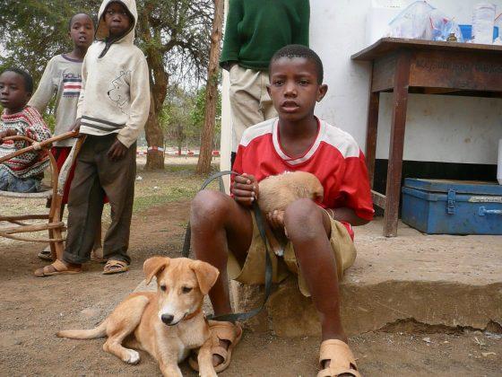 Un jeune tanzanien consulte avec ses 2 chiens à la clinique de Baraa