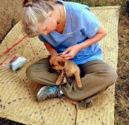 Johanne, une dévouée technicienne, a géré 95 animaux au post-op en Tanzanie