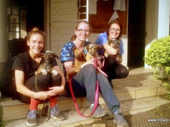 Des stagiaires avec leurs amis chiens après une bonne journée de travail!