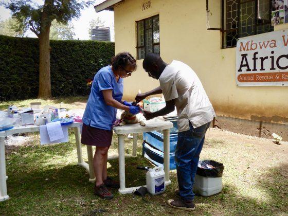 Pré-op à la clinique en plein air à Baraa en Tanzanie