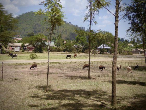 Vue de notre clinique en plein air à Baraa en Tanzanie
