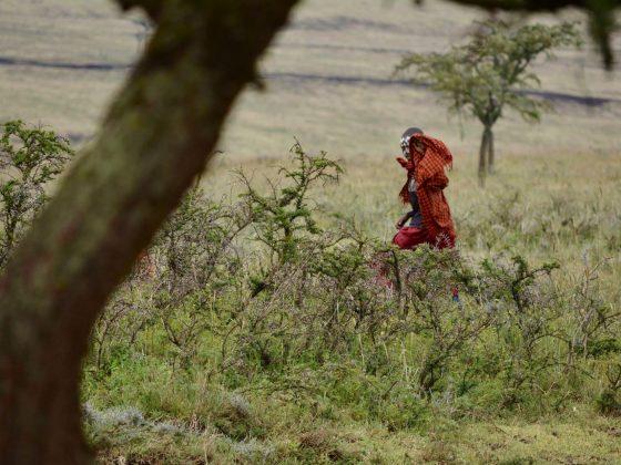Un jeune massai récemment circoncis arbore ce masque et devra errer pendant des semaines en dehors de son village