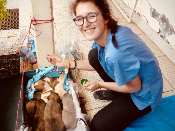 Andréanne s'assure que les chiots vont bien en attendant le retour de leur maman en chirurgie