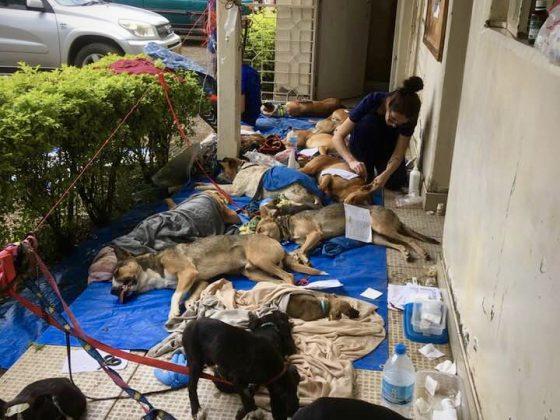 Au début, le réveil des chiens se déroulait sur le balcon du Livestock Office.