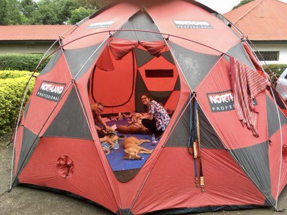 Le réveil des chiens se déroulait dans une tente
