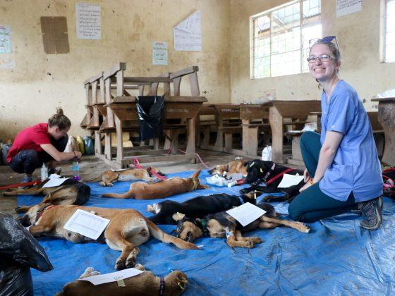 Le réveil des animaux dans une classe d'école en Tanzanie