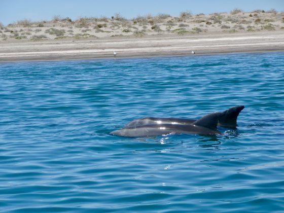 dauphins à La Paz, Baja California