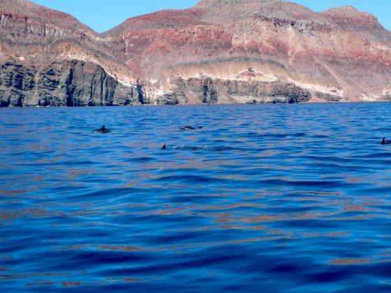 dauphins à Baja California