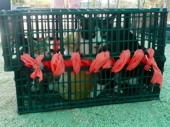 chatte et ses chatons à une clinique de la FAVI à Baja California