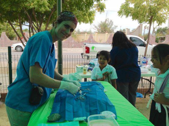 vétérinaire bénévole pour la FAVI au Mexique