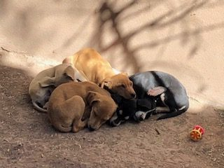 La FAVI adore Animalandia, un refuge exceptionnel à Loreto, Mexique!