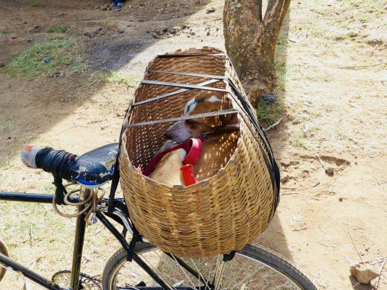 Retour à la maison à vélo