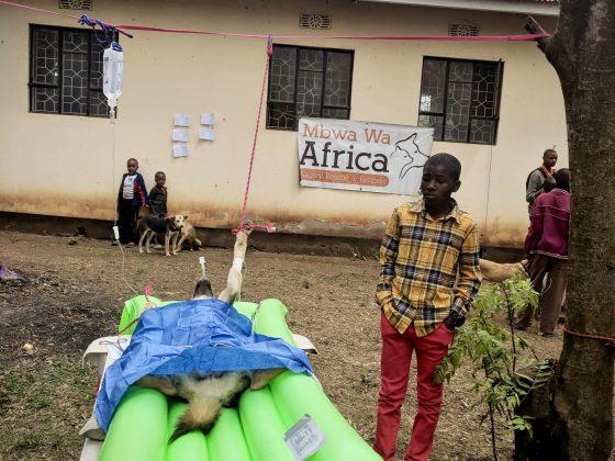Clinique FAVI en Tanzanie; zone opératoire
