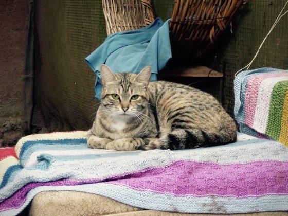 Il y a aussi des chats au refuge Mbwa Wa Africa en Tanzanie