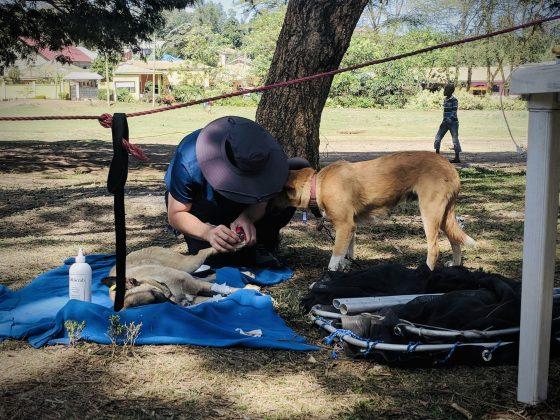 Taille de griffes au réveil à la clinique FAVI en Tanzanie