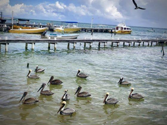 Projet FAVI au Belize