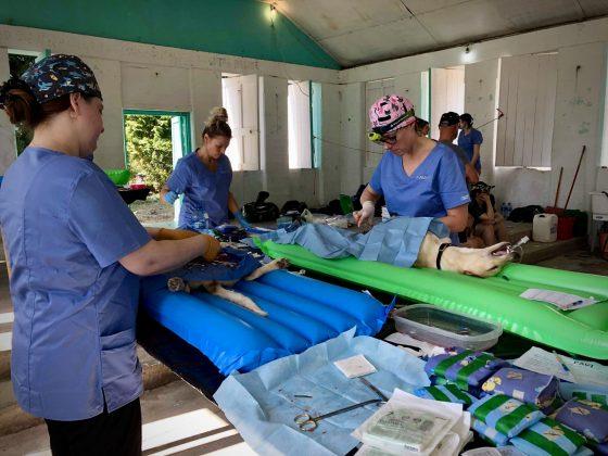 Zone opératoire clinique de stérilisation FAVI au Belize