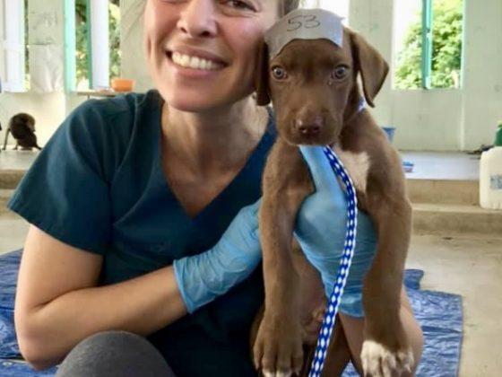 Technicienne en santé animale à la clinique de stérilisation FAVI au Belize