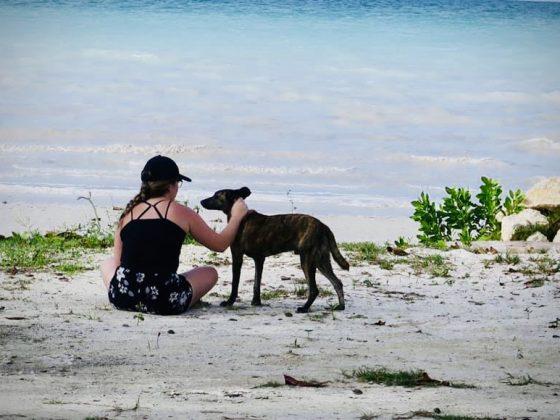 Une bénévole de la Fondation Aide Vétérinaire Internationale réconforte un chien à la plage