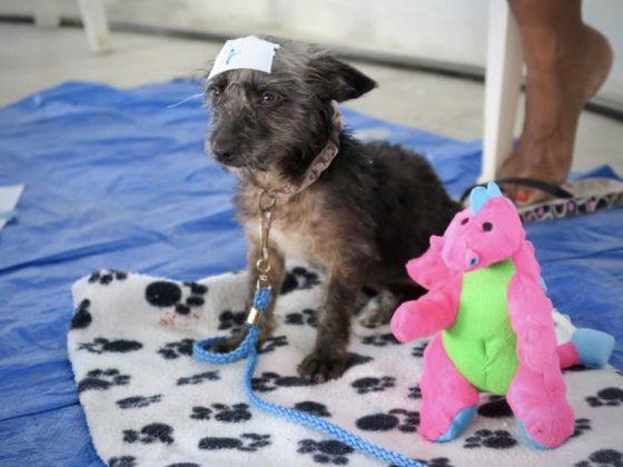 Clinique vétérinaire FAVI au Belize, zone de réveil